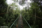 Canopy walkway [costa_rica_la_selva_0867]