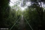 Canopy walkway [costa_rica_la_selva_0868]