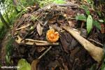Rainforest seed pod