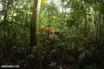 Palm seeds [costa_rica_la_selva_0919]