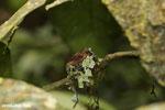 Huimmingbird nest