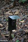 Camera trap [costa_rica_osa_0144]