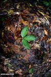Rainforest leaves