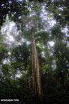 Siquirres rainforest [costa_rica_siquirres_0102]