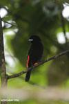 Bird [costa_rica_siquirres_0125]