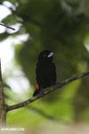 Bird [costa_rica_siquirres_0126]
