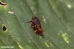 Bug [costa_rica_siquirres_0547]