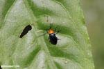Bug [costa_rica_siquirres_0555]