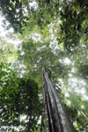 Siquirres rainforest