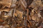 Moth [costa_rica_siquirres_0690]