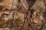 Moth [costa_rica_siquirres_0691]