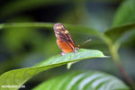 Butterfly [costa_rica_siquirres_0798]