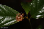Frog [costa_rica_siquirres_0884]