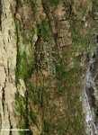 Praying mantis [cr_4007]
