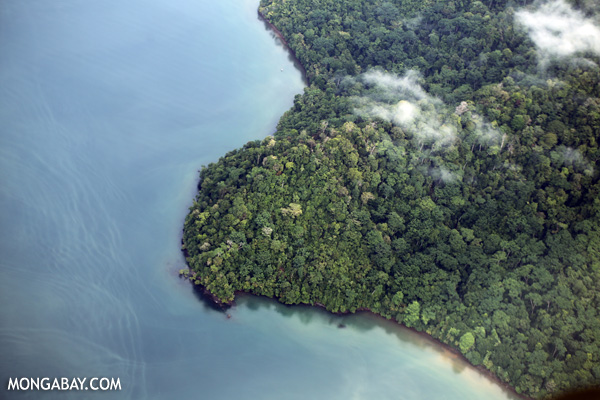 Overhead view of rainforest in Costa Rica [costa_rica_aerial_0374]