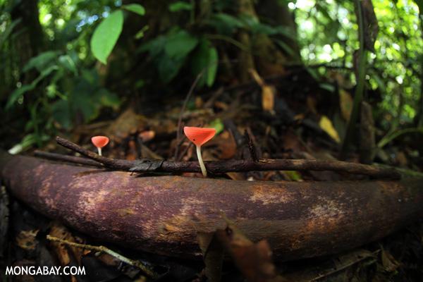 Hongos en Costa Rica