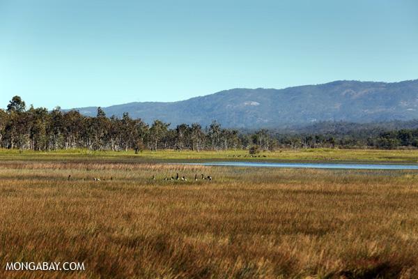 Wetlands in Australia