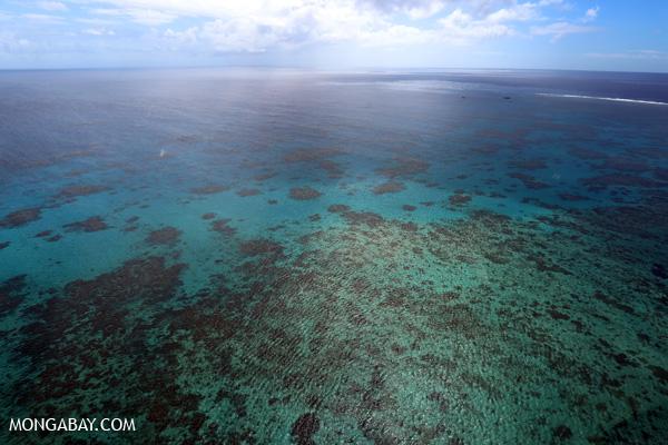 Hastings Reef on the GBR [australia_great_barrier_reef_0253]