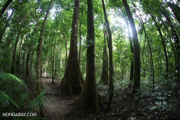 Trail in Mossman Gorge