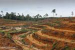 Success of 'land sparing' will depend on global economics, regulations