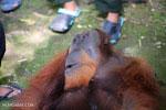 Indonesia's silent wildlife killer: hunting