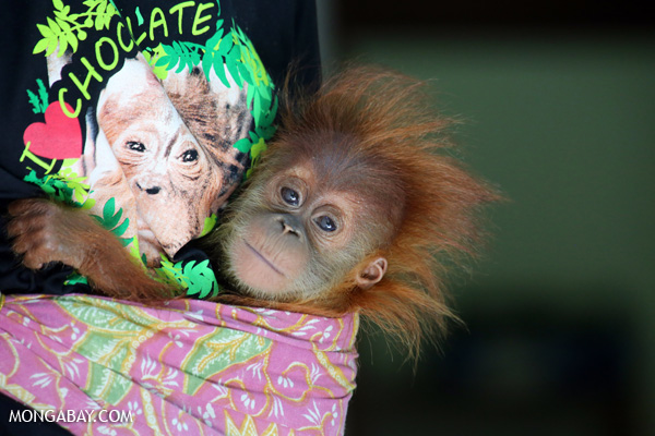 Mobile app reveals what products contain palm oil
