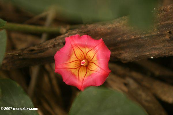 red and yellow vine flower