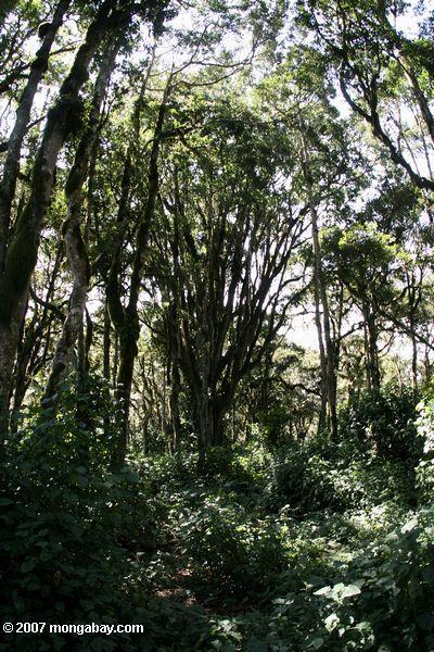 Loita forest