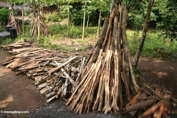 image tresses africaine Sd6umWuz