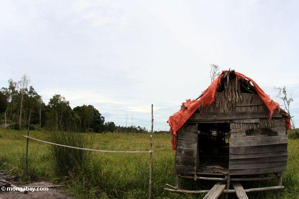 Abandoned homestead in deforestated area (Kalimantan, Borneo - Indonesian Borneo)