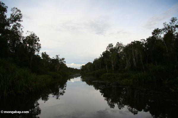 Reflection of forest in the Seikonyer River (Kalimantan, Borneo - Indonesian Borneo)