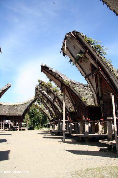 Palawa village (Toraja Land (Torajaland), Sulawesi)