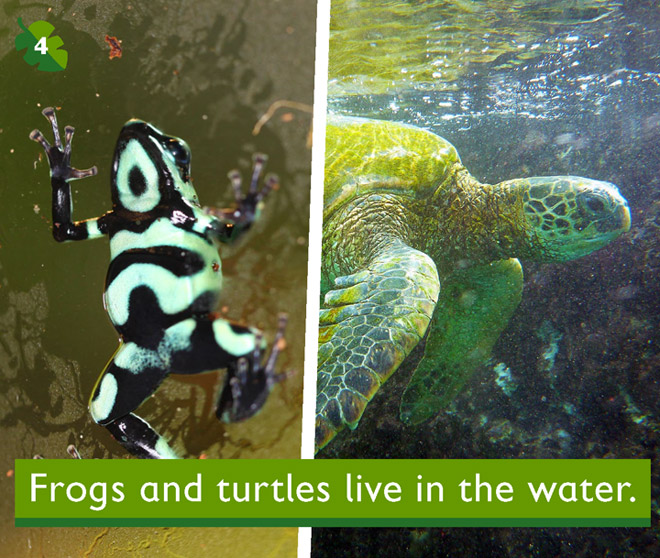 Frogs and turtles live in the water.