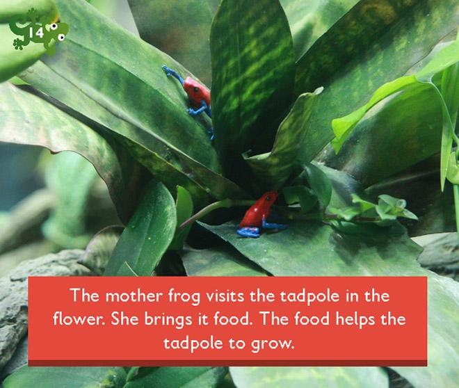 if you hopped like a frog book pdf