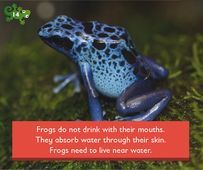 Do Frogs Have To Drink Water