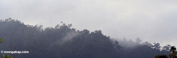 Steam rising from a forested ridge in the Malaysian rainforest