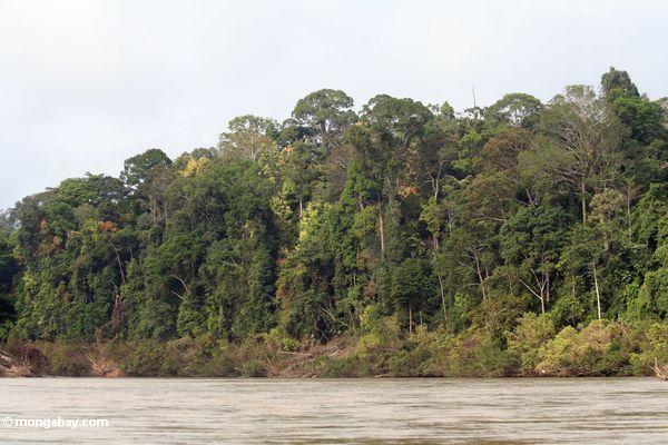 Tembeling River rain forest