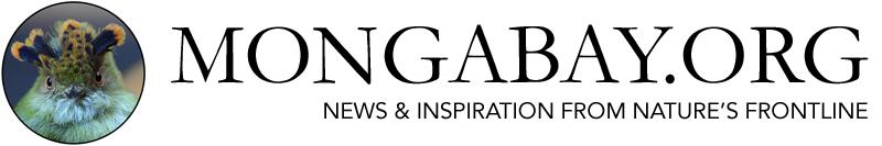 Mongabay.org