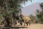 Enough for an elephant: why are Cameroon's elephants raiding fields?