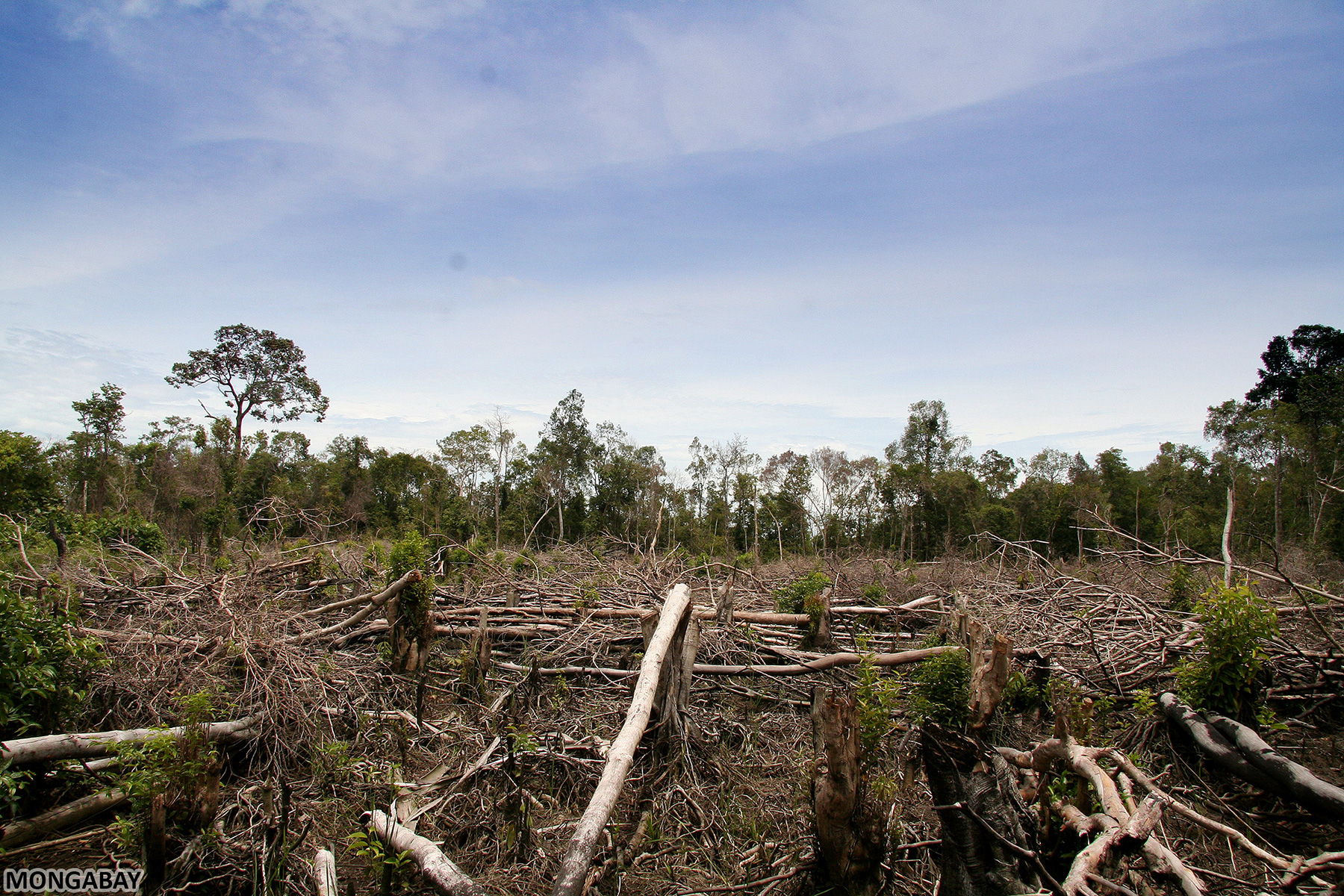 Essay on how people destroy the environment
