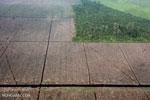 Jokowi must strengthen Indonesia's forest moratorium, not just extend it: activists