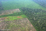 Palm oil certification body to establish stronger voluntary standard