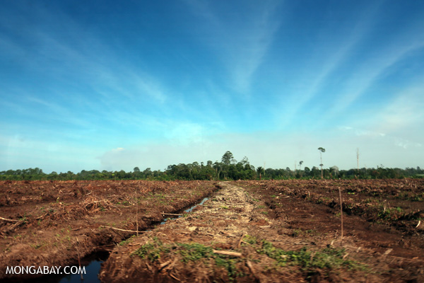 Deforestation for oil palm in Riau, on the Indonesian island of Sumatra