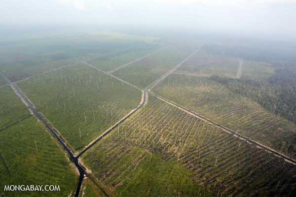 Light haze over a deforested peat forest in Riau, Sumatra in February 2014. Photos by Rhett Butler