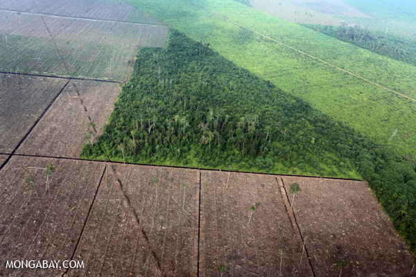 Recent deforestation in Sumatra, Indonesia.