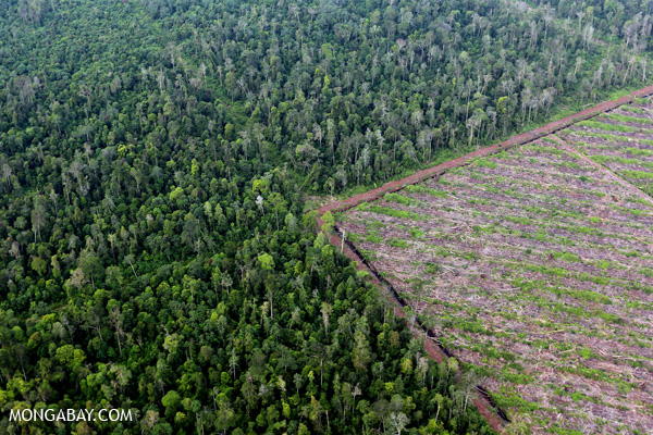 Sumatran forest is felled to make room for another plantation. Photo by Rhett A. Butler.