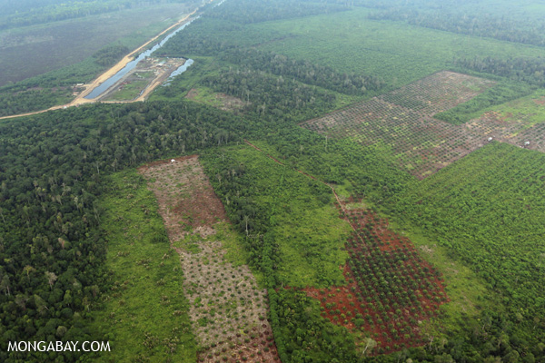the deforestation of the amazon a case study in understanding ecosystems and their value