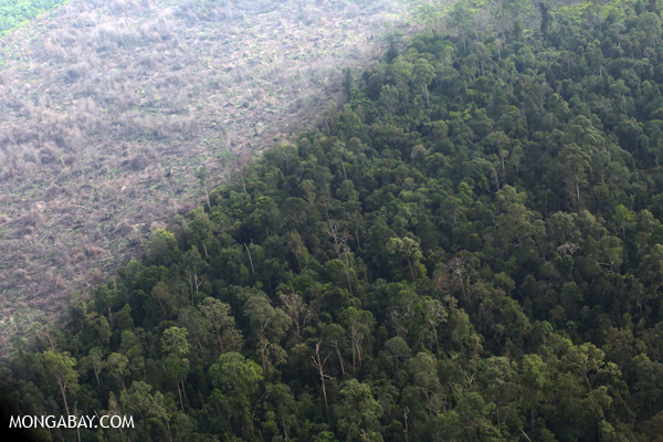 Stark contrast between primary forest and cleared forest in Sumatra. Indonesia has the world's highest deforestation rate. Photo by: Rhett A. Butler.