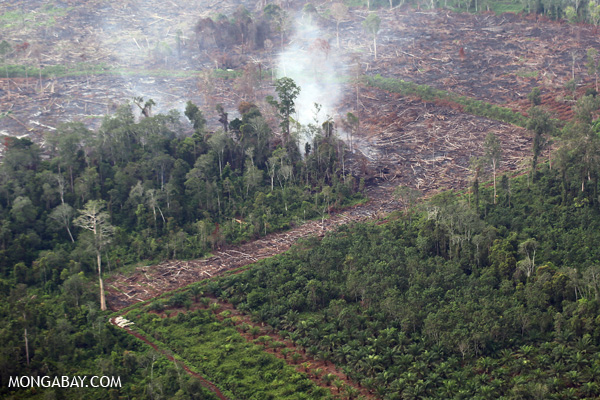Peat fires in Sumatra to clear forests releases tremendous amounts of carbon into the atmosphere. Photo by: Rhett A. Butler.