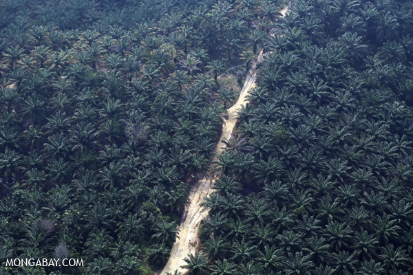 Oil palm plantation in Riau on the Indonesian island of Sumatra.